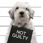 Not Guilty at Greater Houston Orthodontics in Houston TX